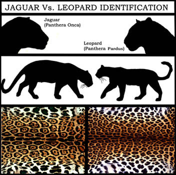 Jaguar Vs. Leopard by NaturePunk