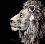 India Ink Lion Drawing