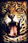 Biiiiiiiig Yawn