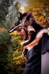 Dingo Skin Headdress