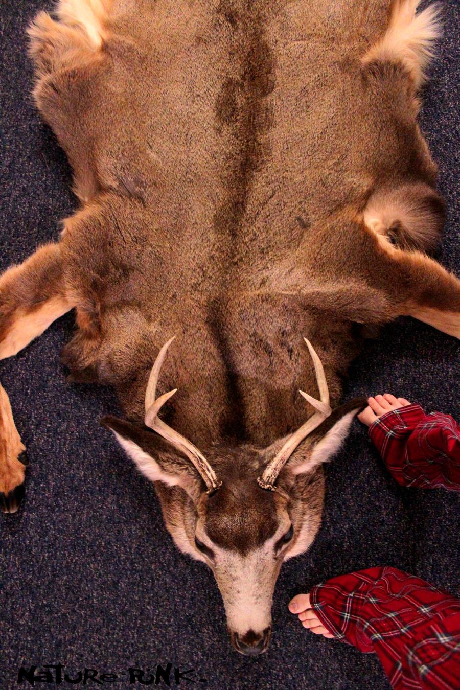 Amazing Deer Skin Rug By NaturePunk Deer Skin Rug By NaturePunk