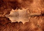 Mongoose Pelt by NaturePunk