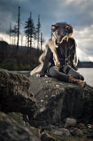Teva -- Wolf Pelt Taxidermy Headdress by NaturePunk