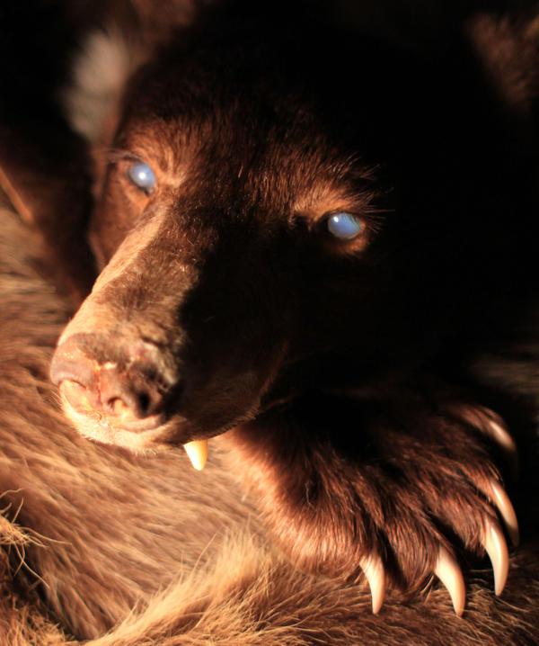 Blind Black Bear Headdress WIP by NaturePunk