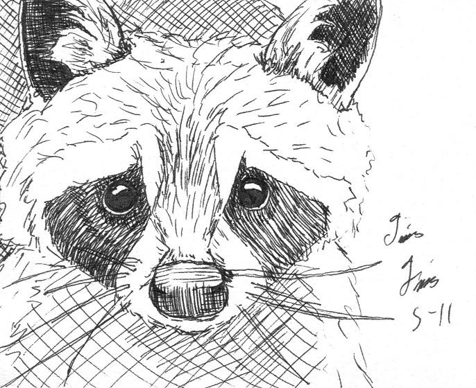 Line Drawing Raccoon : Raccoon sketch by uncleguts on deviantart