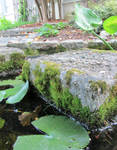 Stepping Stones and Liliypads