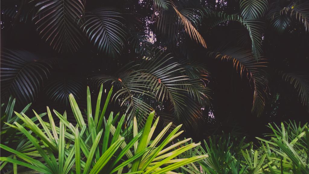 Palms by TheSkyFx