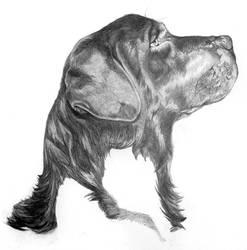 Tempete's Portrait