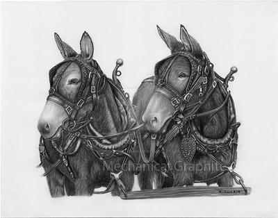 Mule Team Pano by MechanicalGraphite