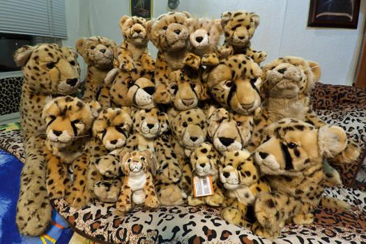 All my cheetahs 2011