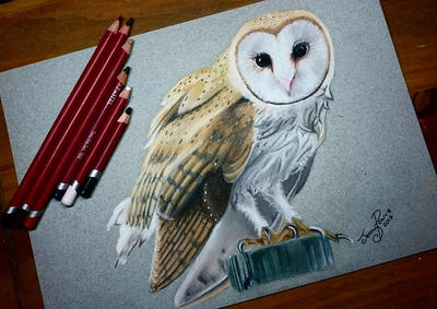 Barn Owl Portrait by JenJensketches