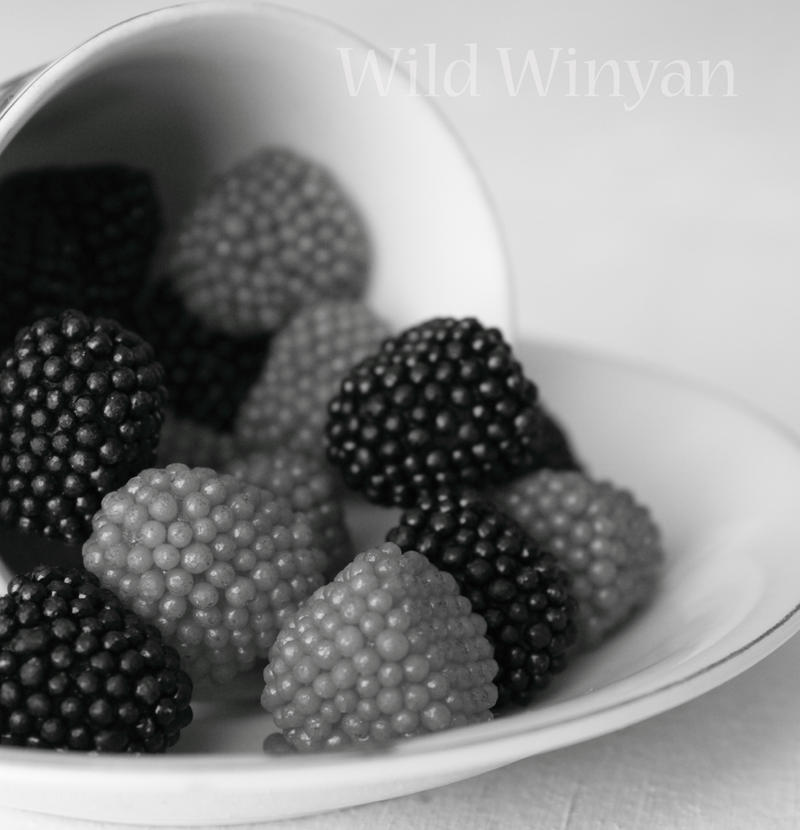 Sweetness in Black and White by WildWinyan