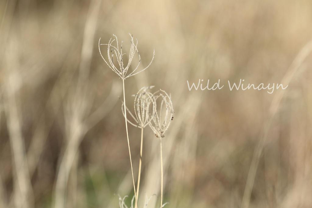 Shall we all dance by WildWinyan