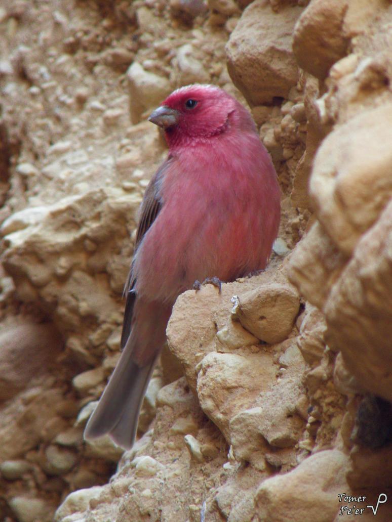 Free Bird by Tomer-DA