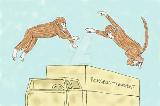 Planet of the Apes - Saving the Bonobo