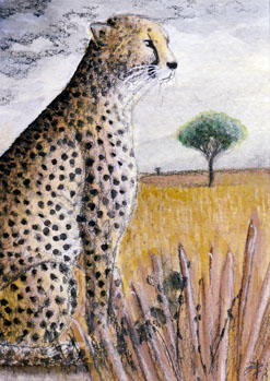 Cheetah ACEO - Redwall151