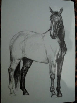 progress_horse
