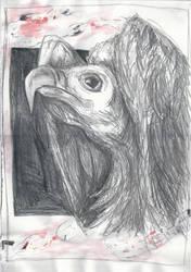 Aves #1