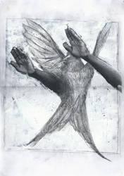 Aves #2