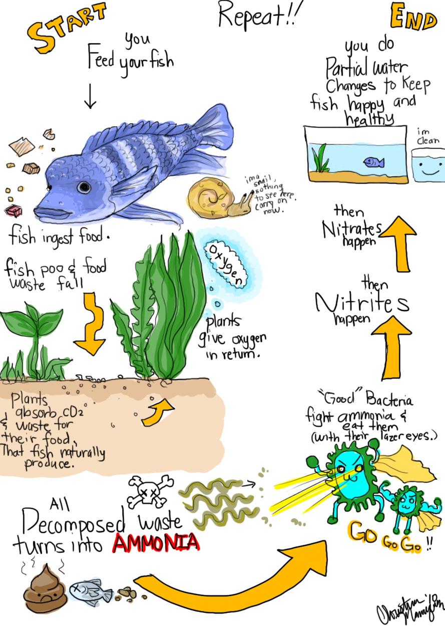 Need some help :( - Aquarium Forum