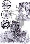 School exercise - tiger 3