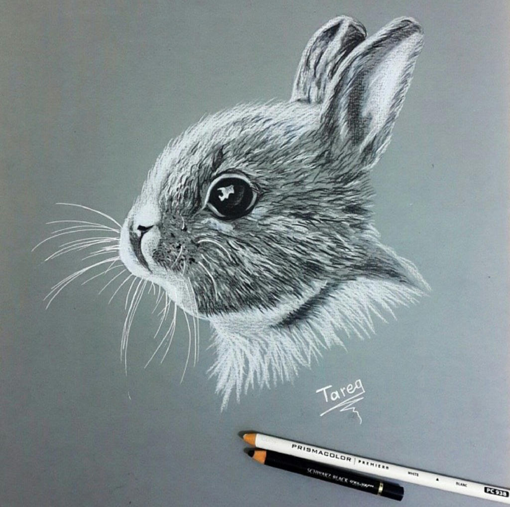 my drawing pencil by tareg009