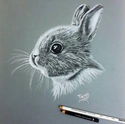 my drawing pencil