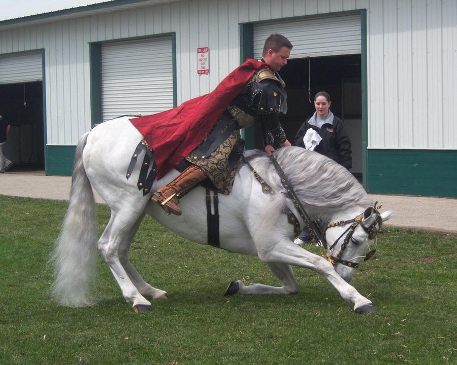 Gray Andalusian Stallion 008 by diamonte-stock on DeviantArt