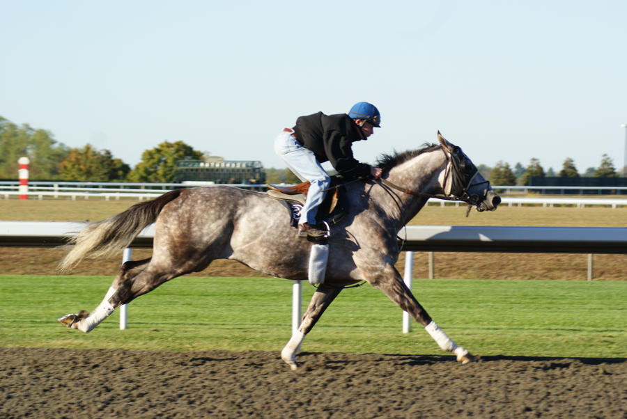 Grey thoroughbred racing