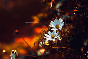 Nature by frayart