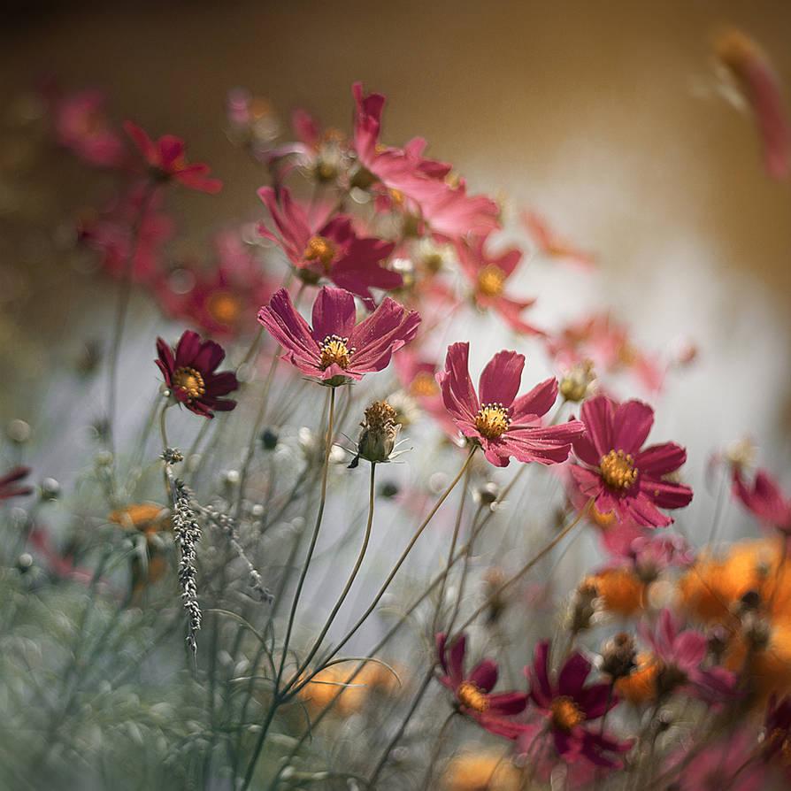 spring, the by frayart