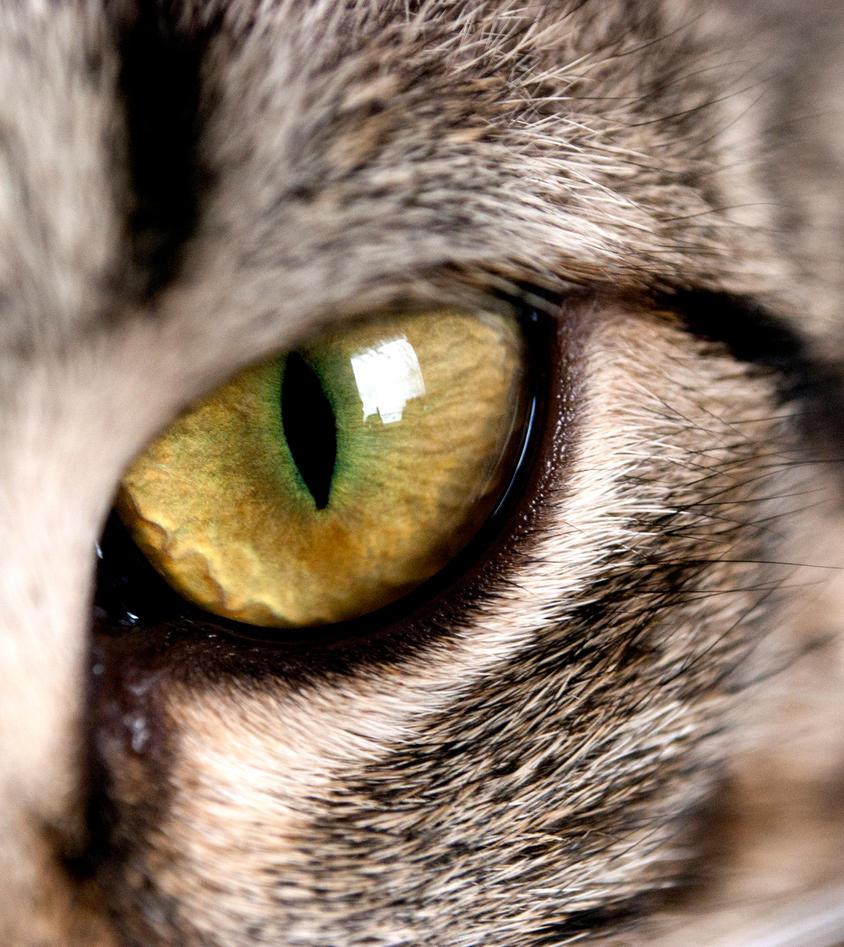 My Cats Eye Trembles