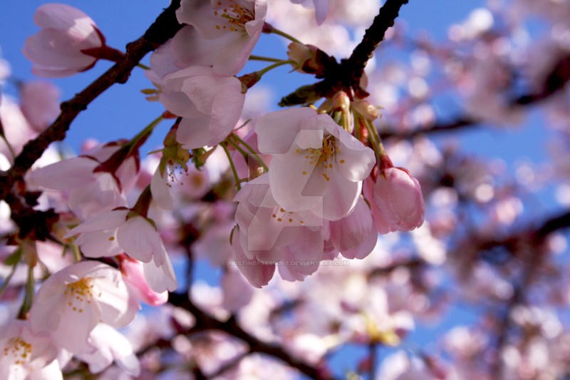 Spring1 by PristinePressure