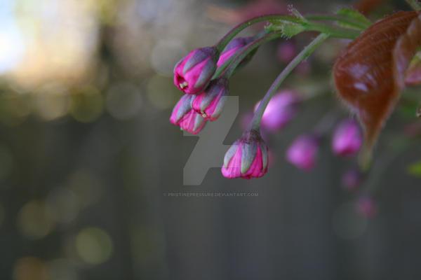 spring4 by PristinePressure
