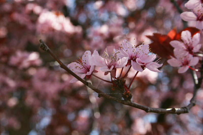 spring6 by PristinePressure