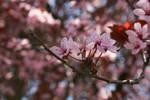 spring6