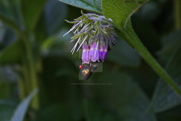 Busy Bee by PristinePressure