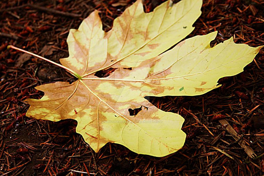 leaf by PristinePressure