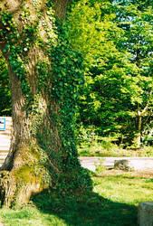 Tree 2 by WanderingSoul-Stox