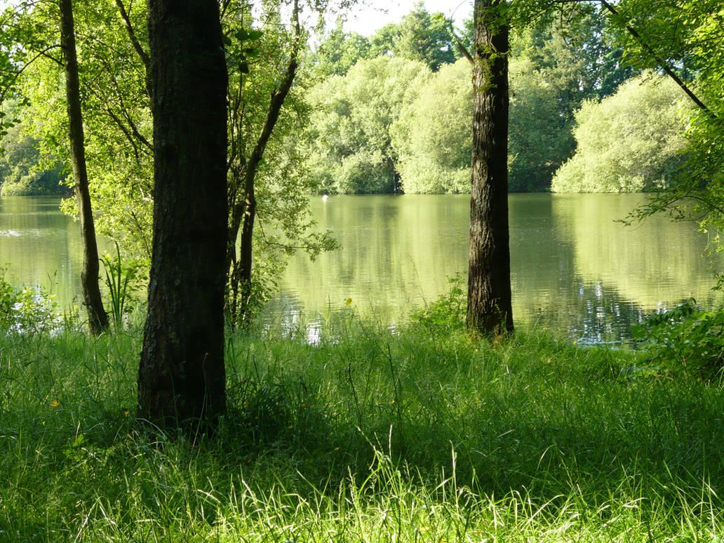 Near The Pond 1