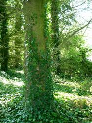 Tree 1 by WanderingSoul-Stox