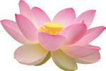Loto Flower PNG