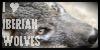 I Love Iberian Wolves Stamp by lakemutt