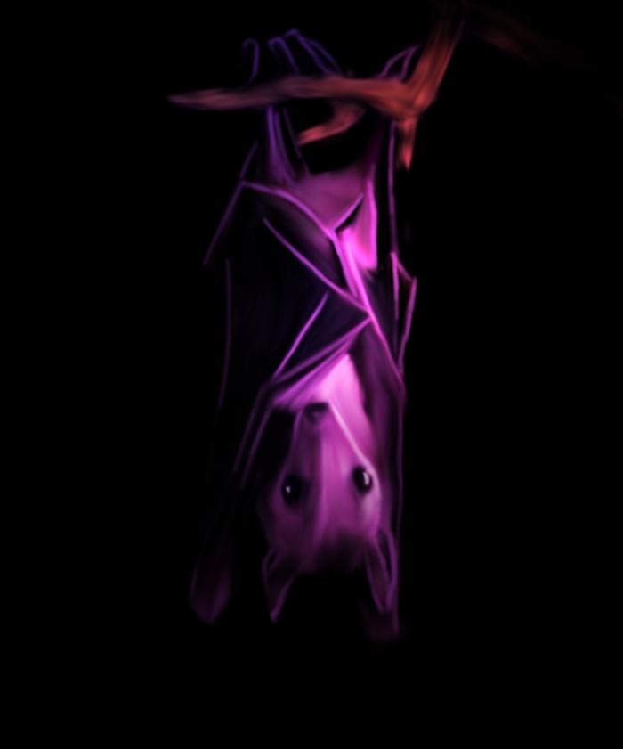 Purple Bat By Malla13 On Deviantart