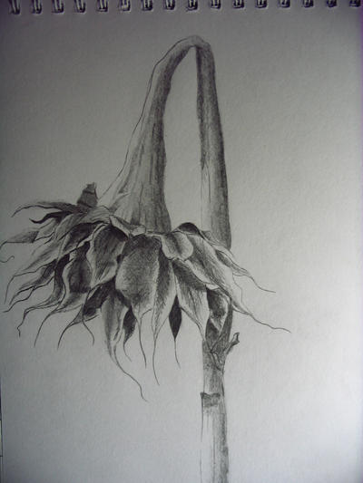 Dead Flower by Lotus2503 on DeviantArt