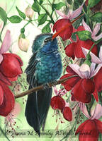 OSWOA Hummingbird and Fuschias by JoannaBromley