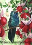 OSWOA Hummingbird and Fuschias