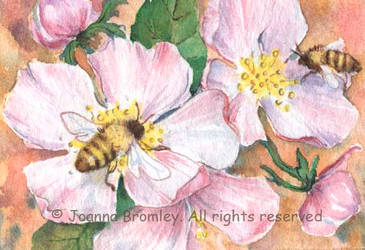 ACEO Wild Rose and Bees by JoannaBromley