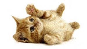 A little cat Final