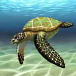 Sea Turtle by JeMiChi